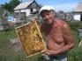 Продам Мед разнотравье Большенарым 750 тг/кг,  горный Катон 1800тг/кг