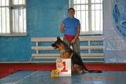 продам щенка немецкой овчарки сука